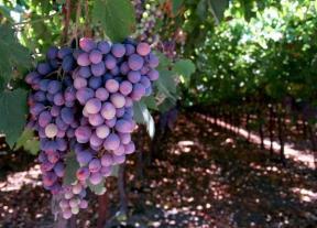 barossa-valley-wine-tasting