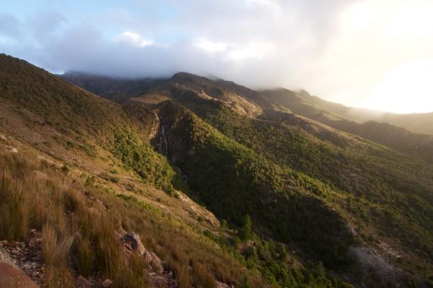 Tasmaania
